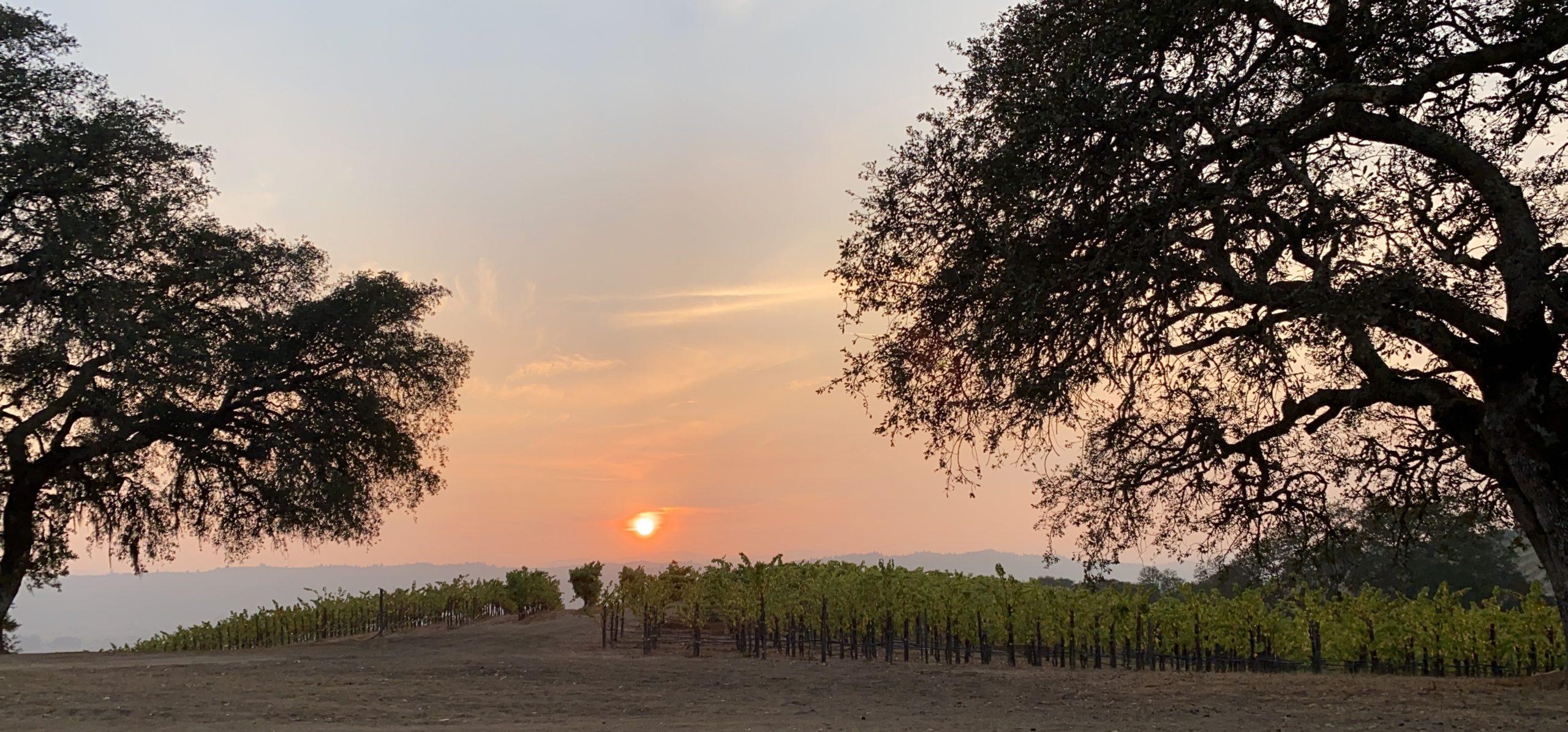 smoky sunset between 2 oak trees