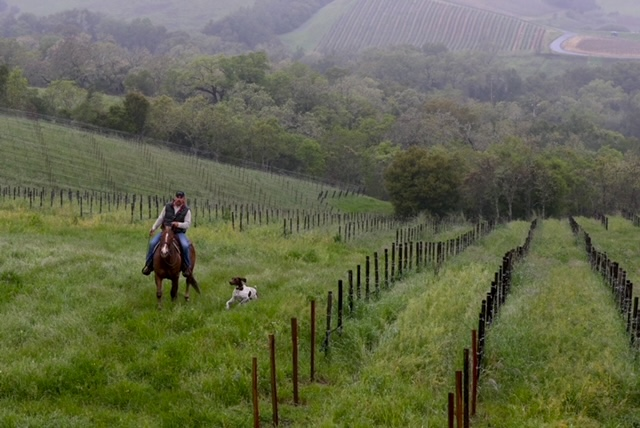Paco on horse in vineyard