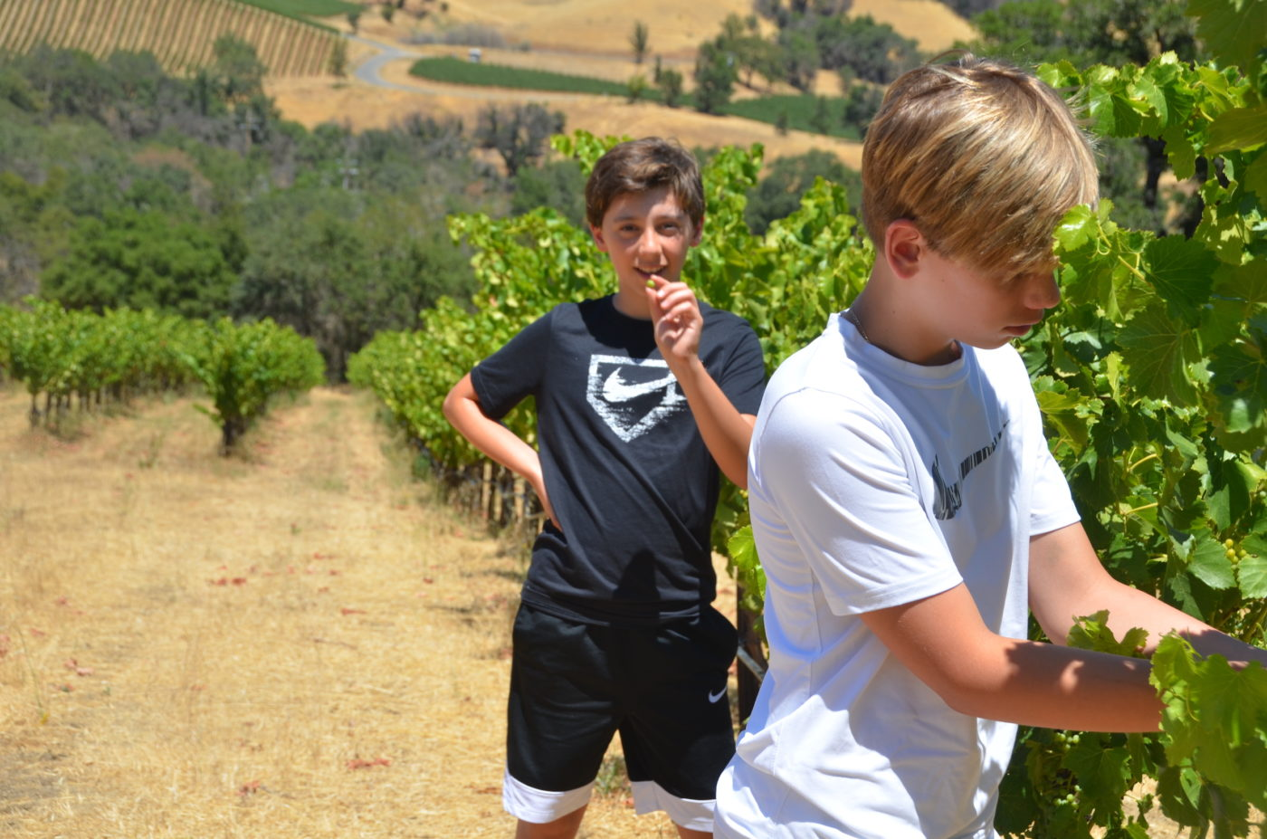 Roco and Luca in the vineyard