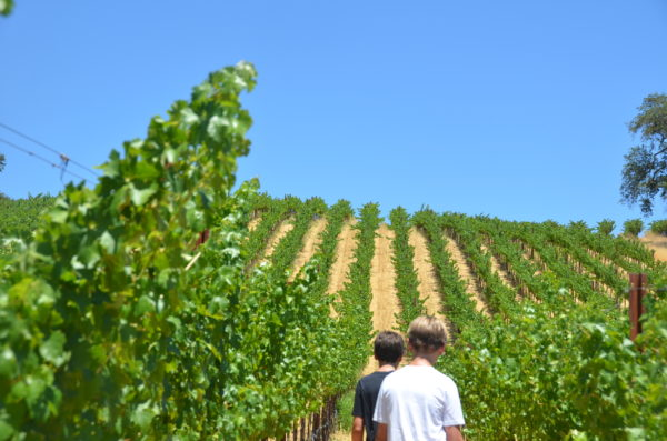 roco's and luca's backs in the vineyard